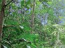 Tropischer Wald.