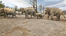 Elefanten im Himmapan-Park